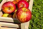 りんごをApple と呼ばせるつもりはなかったんだけど