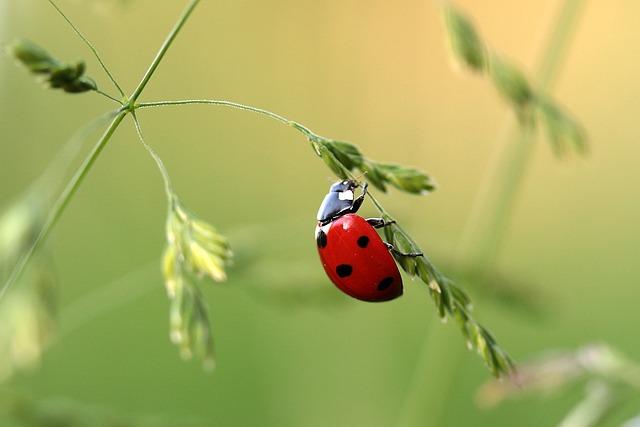 lady bug? lady bird?てんとう虫から学んだバイリンガル育児の難しさ