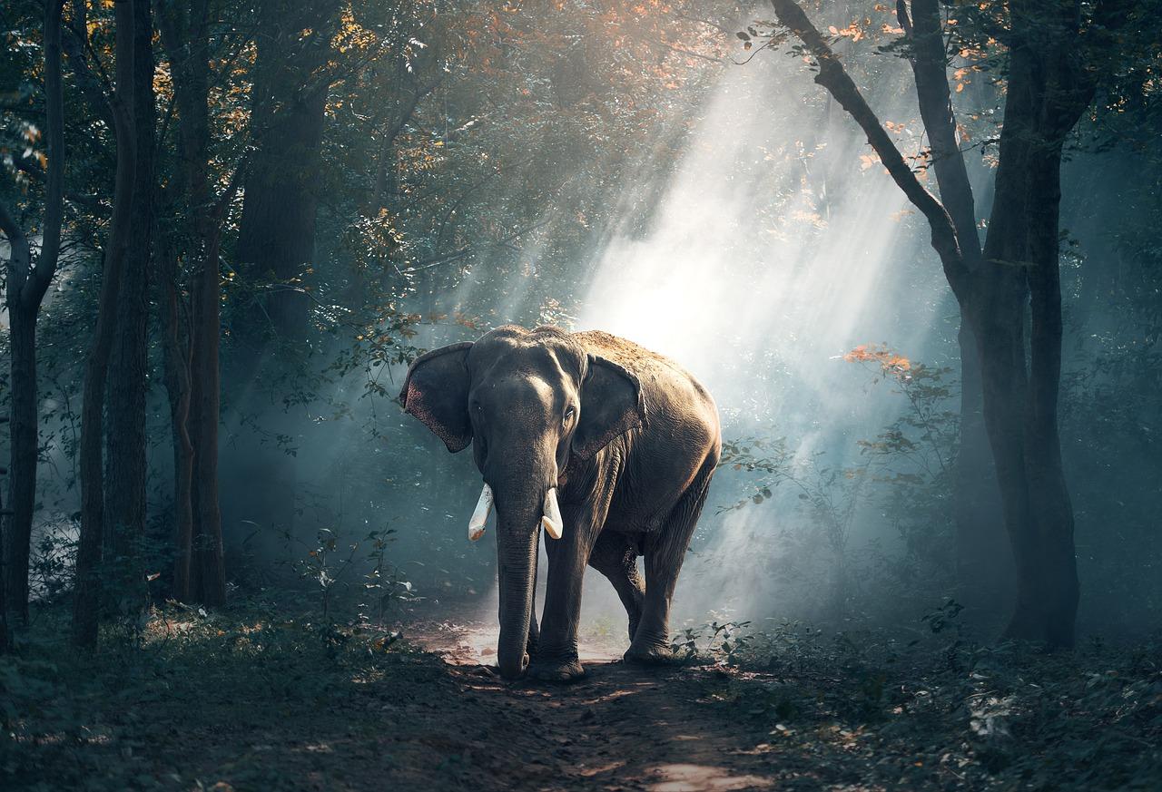 動物園に象がいるのが当たり前の時代は終わっていた