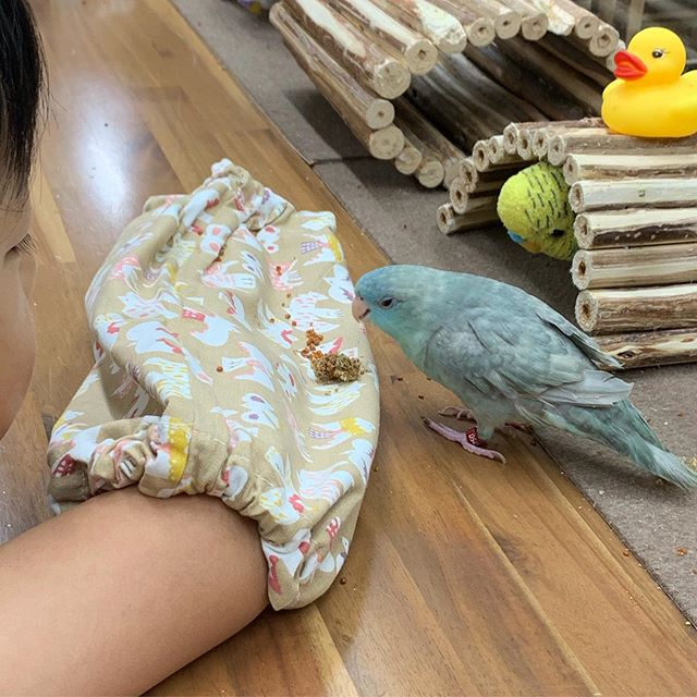 小鳥ひろばの鳥さん