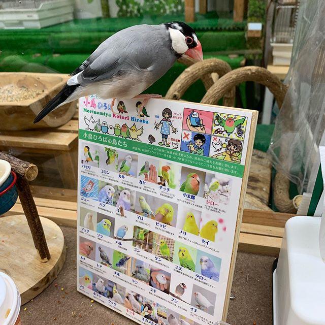 お店の鳥たち